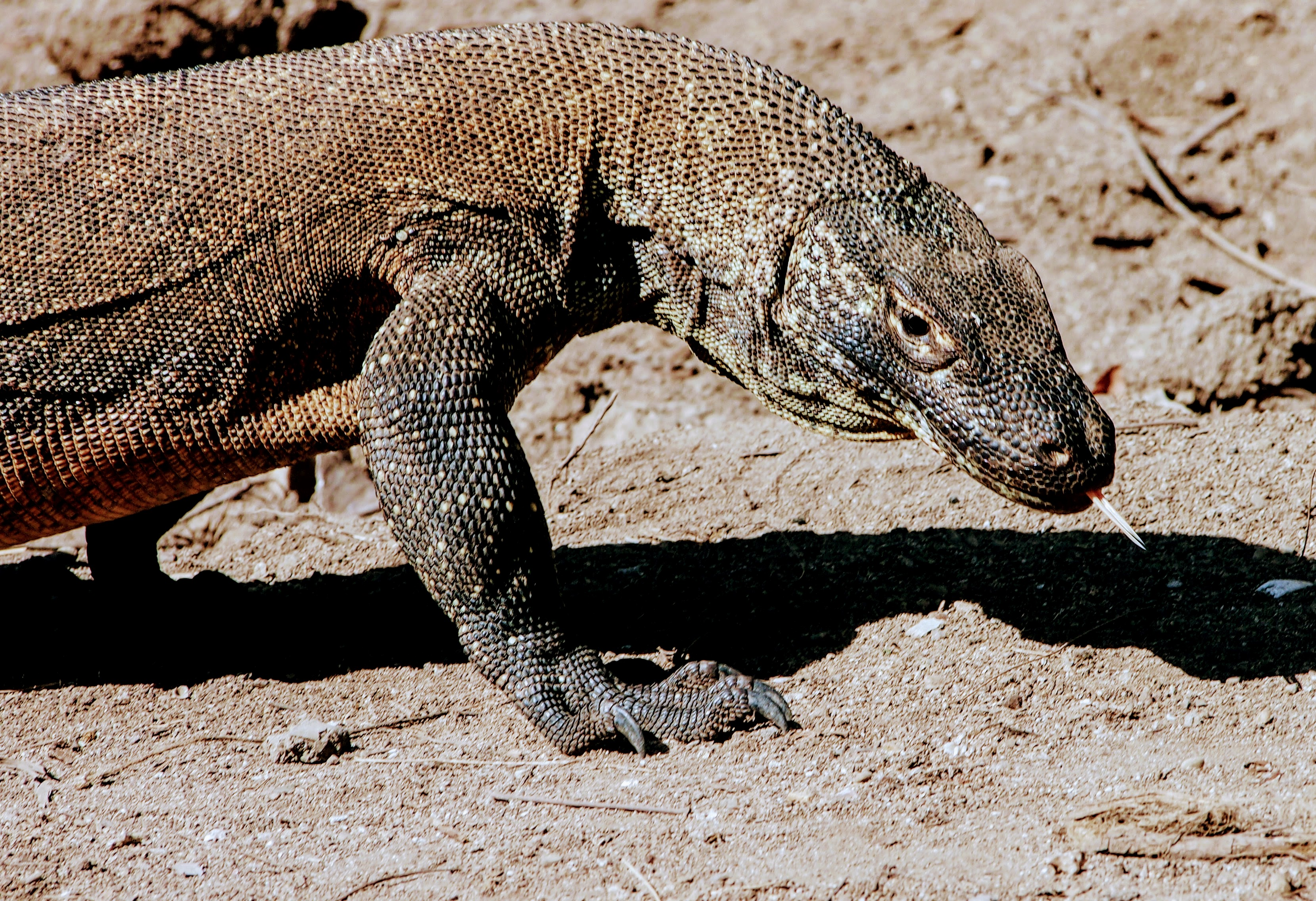 Komodo National Park: All The Reasons You Need To Visit