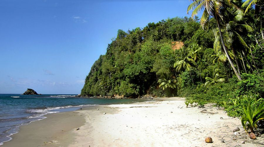A white sand beach with jungle behind in Dominica a great green getaway