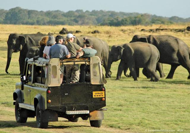A group of people in a 4WD watching Elephants on Safari one of the top things to do in Sri Lanka