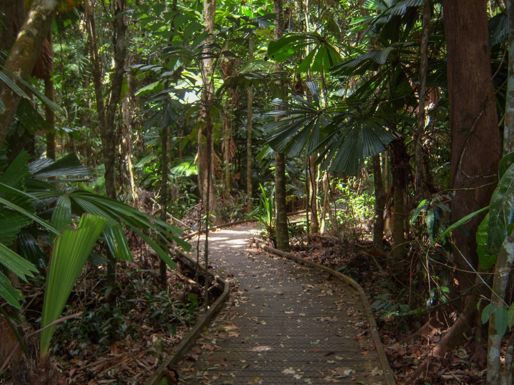 a path leading through the Daintree National Park, Australia