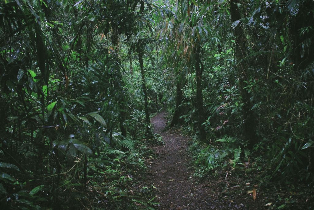 A dirt path leading through lush jungle in Costa Rica