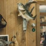 Largemouth Bass 2