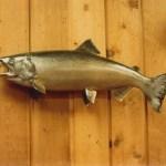 King Salmon 2