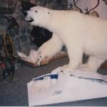 Polar Bear with Arctic Fox