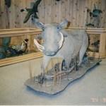 Warthog (Life Size)