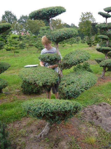 Gartenabgrenzung Mit Pflanzen – Stockyard Info