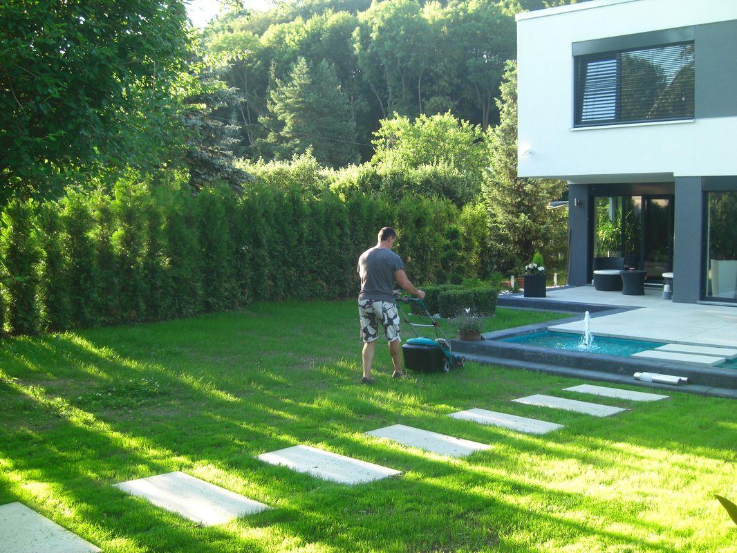 garten sichtschutz pflanzen | moregs, Best garten ideen