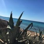 #PlayaMitjorn #Formentera #Beach #Strand