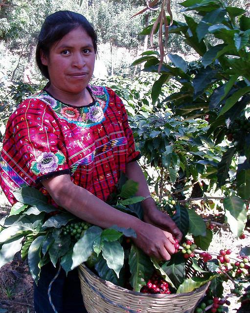 Guatamalan Coffee