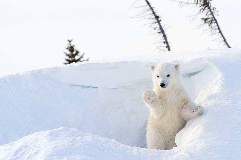 Hello, I'm Bear