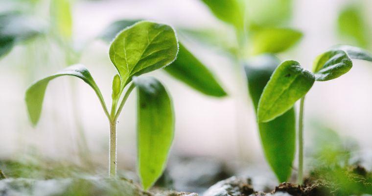 Développement durable : une définition claire en quelques coups de crayon!
