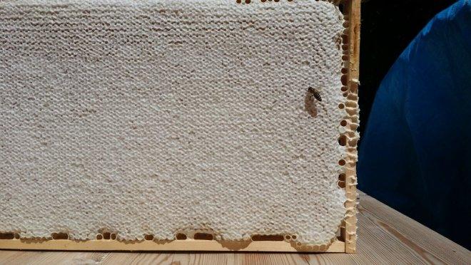 Honigwabe erntereif verdeckelt