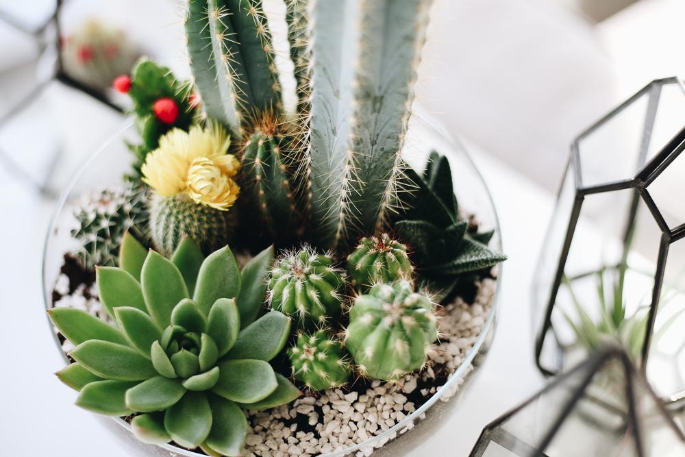 Mini jardin  o acheter un terrarium et comment le faire soimme I Blog Ma maison Beko
