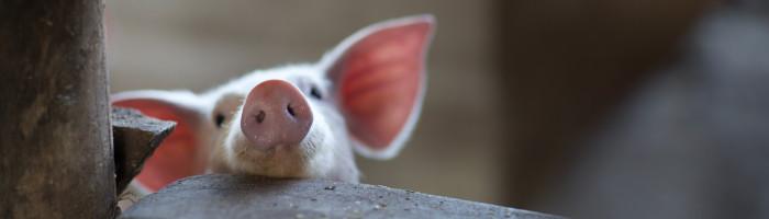 La sobirania alimentaria i el pensament il·lusori