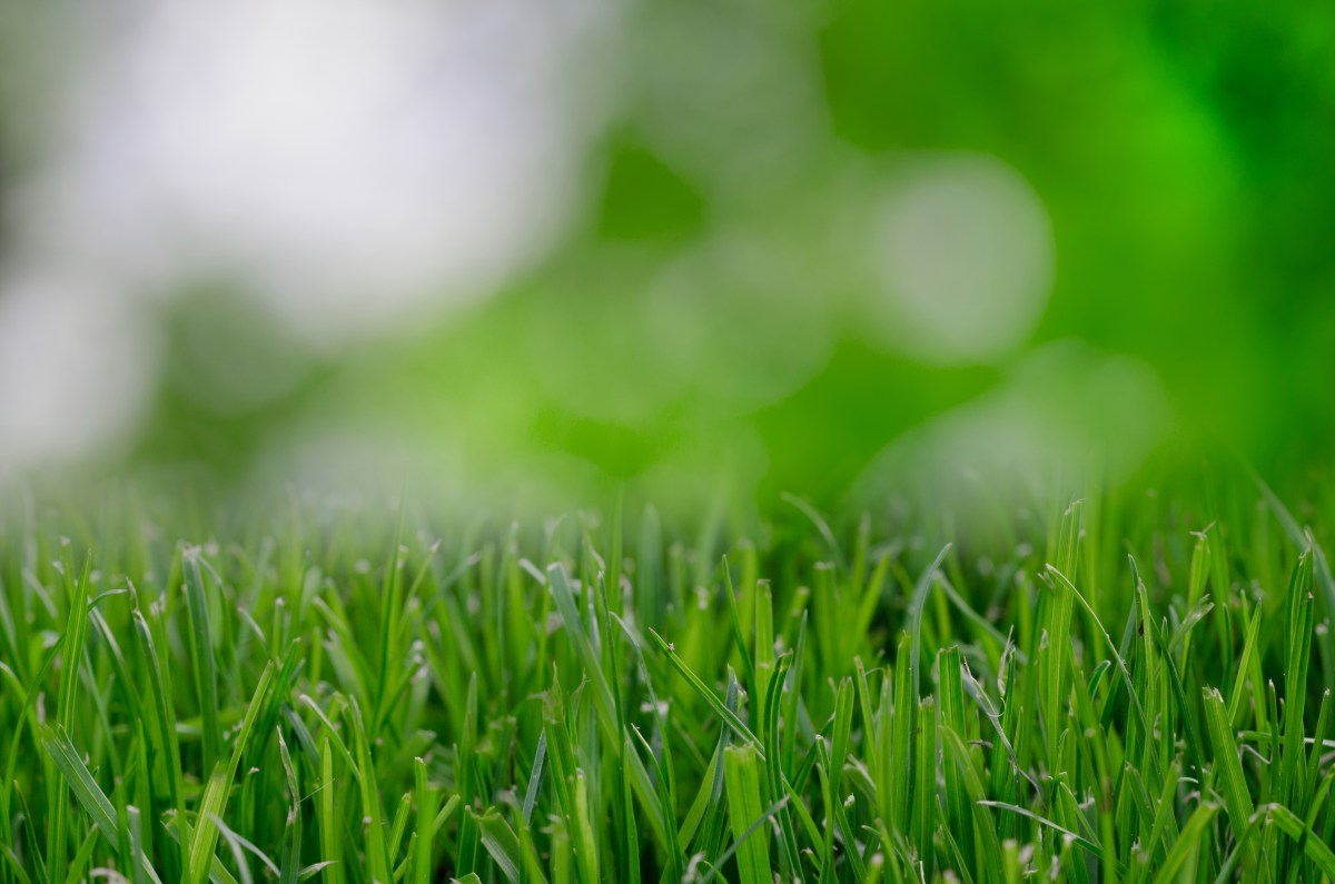 Are you mowing your lawn at the right time?