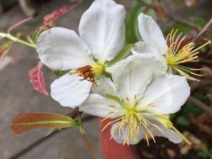 fleur de bach blog betilami