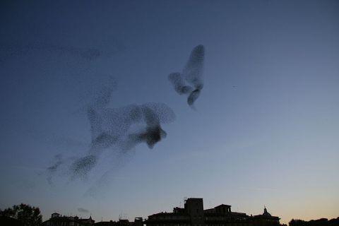 800px-Flock_of_birds_-Roma,_Italia-23Nov2008