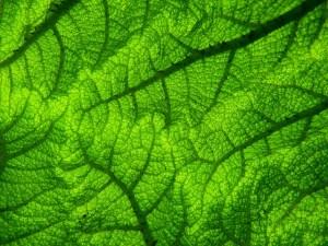 pianta foglia