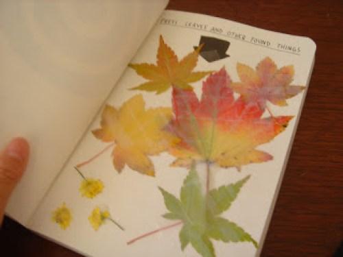 erbario foglie secche