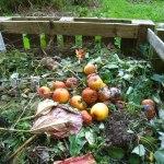 Come fare il compostaggio domestico, in giardino o in appartamento