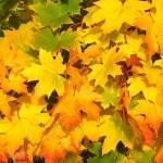 Giardino e orto didattico, i lavori di Novembre