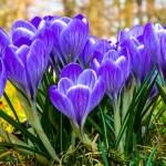 Giardino e orto didattico, i lavori di Marzo
