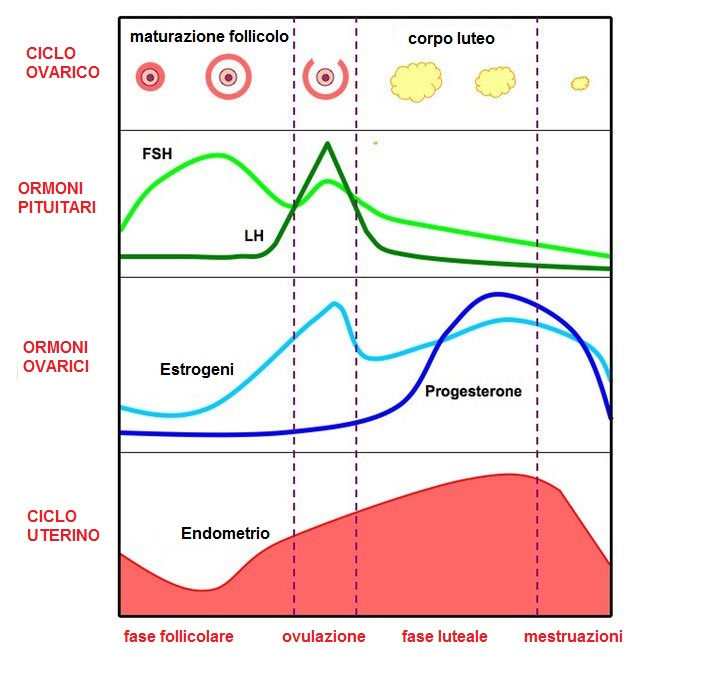 Come funzionano gli ormoni femminili e come incidono sull equilibrio psicologico femminile - Sensazione di bagnato prima del ciclo o gravidanza ...