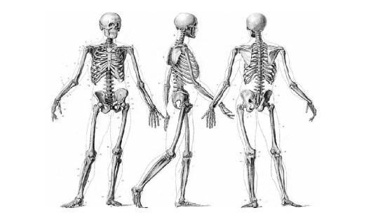 scheletro ossa