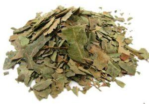 foglie neem essiccate