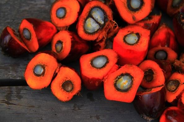 frutti di palma da olio