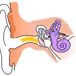 Il tappo di cerume nell'orecchio, cos'è, perché si forma e come rimuoverlo naturalmente