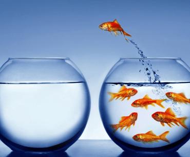 churn rate: peixe pulando do aquário
