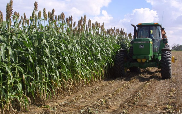 sweetsorghum_and_tractor.jpg
