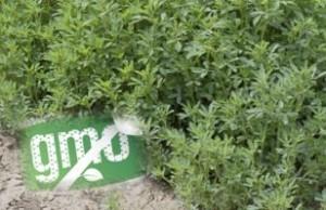 Roundup & Glyphosate Resistant Superweeds