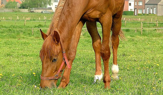 Horse liver and GI health becomes a focus in spring.