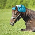 Managing Stress in Our Horses & Ourselves