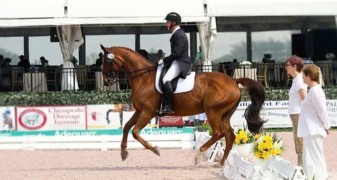 Wellington, Florida: A City of Horses