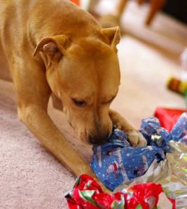 dog gift Christmas holiday paper BioStar - Canine Tips for Happy Holidays