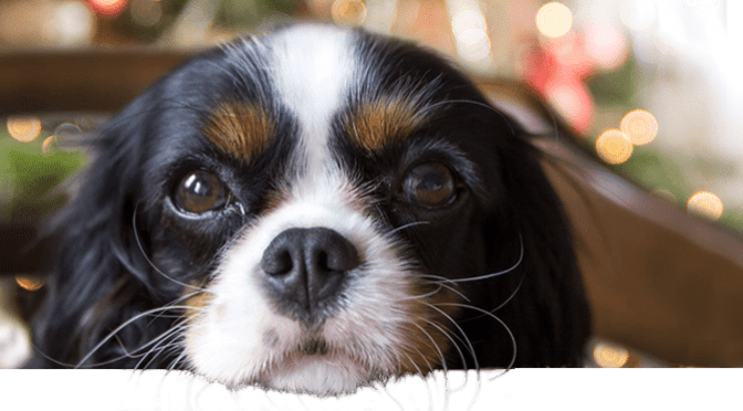 BioStar's Kemosabe shares his Christmas stew for dogs