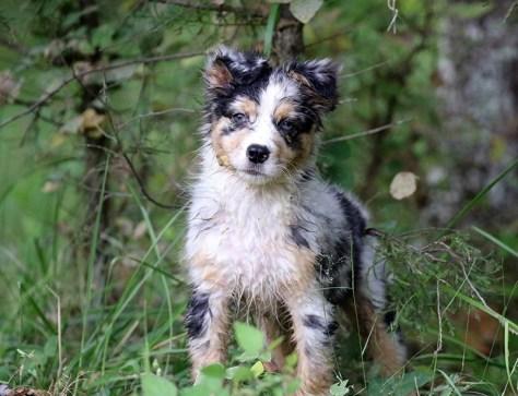 Wookie the wet puppy by BioStar US