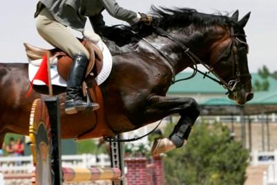 Sweating jumping horse
