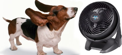 dog with a fan