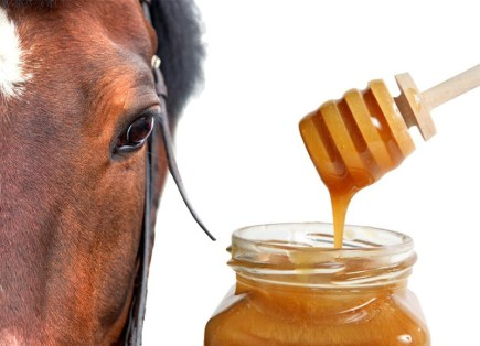 Manuka Honey for Wounds on Horses | BioStar US