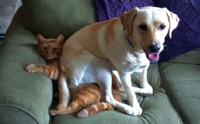 Dog sitting on the cat