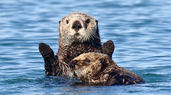otters being otters