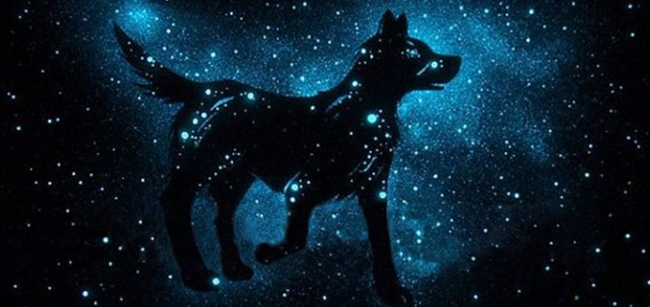Canines and the Cosmos: Practical Astrology for Dogs
