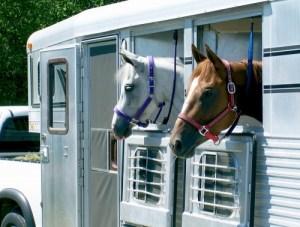 Horse Trailer | BioStar US