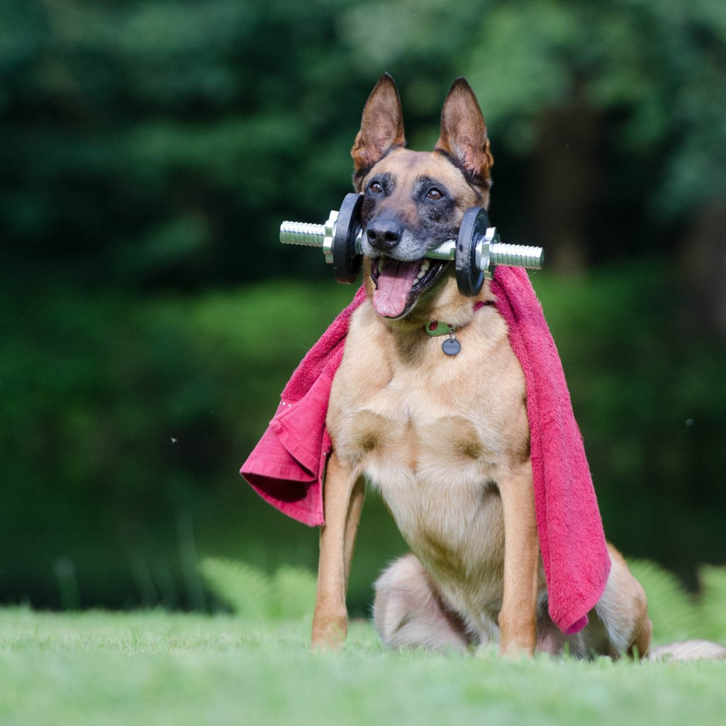 Superdog | BioStar US
