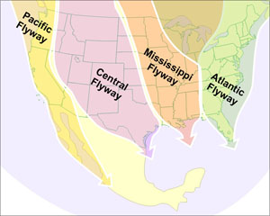 Migrating Birds Diagrams International Bird Rescue Every Bird Matters 187 Blog