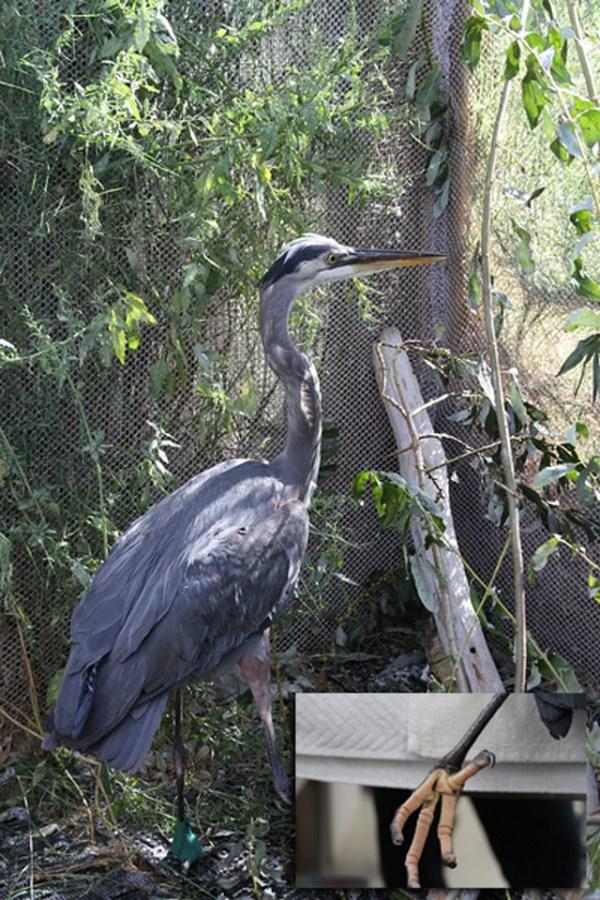 International Bird Rescue Every Bird Matters187 Blog